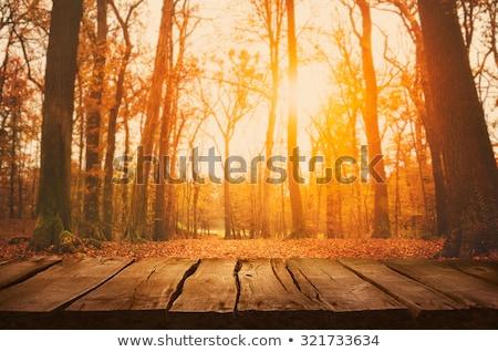 autumn fall leaves falling into green grass stock photo © lunamarina