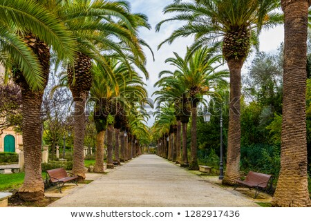 Palm Tree Alley Stock photo © zhekos