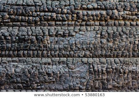 Charred wood and twig. Stock photo © PavelKozlovsky
