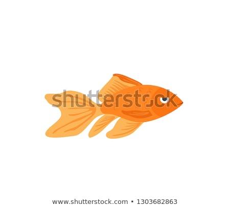 Marine life with golden fish, vector illustration  Stock photo © carodi