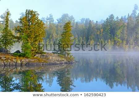Fog and Reflections in the North Woods Stock photo © wildnerdpix