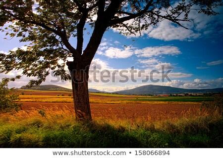 Typical Polish landscape Stock photo © andromeda