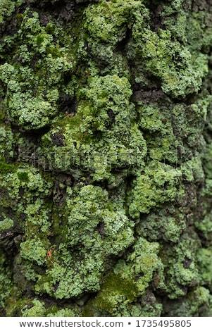 Yosun havlama can kullanılmış doku orman Stok fotoğraf © alekleks