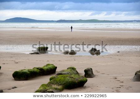 Zielone błoto banki plaży niezwykły Irlandia Zdjęcia stock © morrbyte