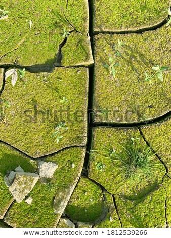 fissuré · sol · détail · nature · terre · morts - photo stock © tashatuvango