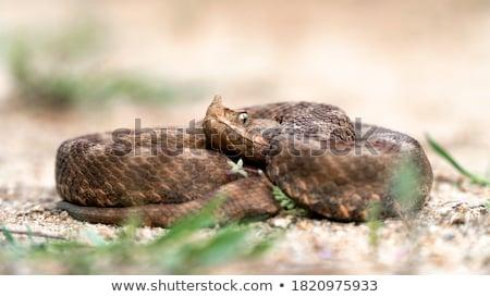 álca nagy női európai homok orr Stock fotó © taviphoto