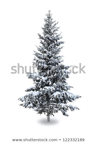 Pinho árvores neve nevasca montanhas árvore Foto stock © meinzahn