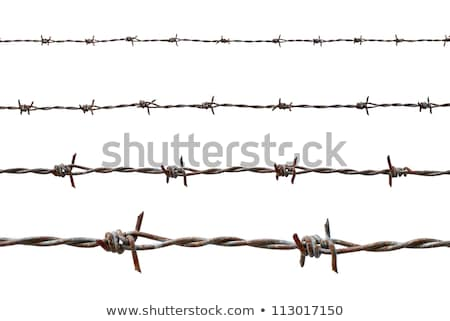 Razor Wire and Barbed Wire Stock photo © dcslim