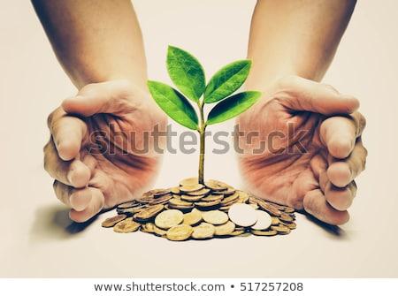 zöld · kéz · üzletasszony · ázsiai · tart · névjegy - stock fotó © elwynn