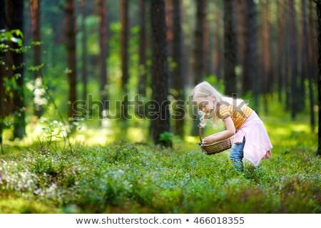 áfonya · bokor · otthon · kert · étel · nap - stock fotó © arenacreative