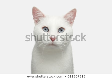 Beyaz kedi kafa bıyık Stok fotoğraf © miracky