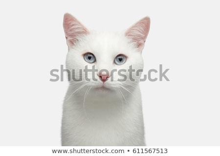 белый · кошки · голову - Сток-фото © miracky