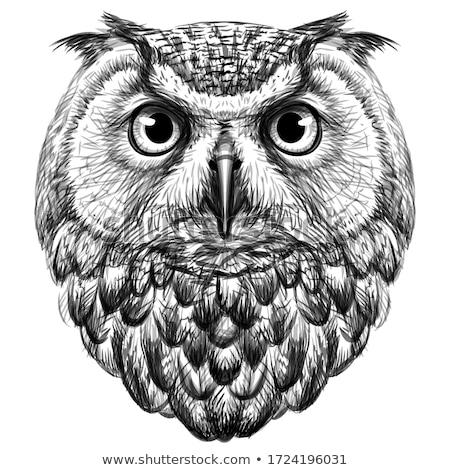 isolado · coruja · branco · fundo · animal · coruja - foto stock © kirill_m