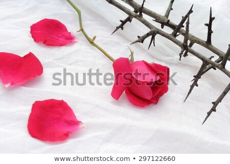 Thorns against white fabric, Christian background with copy space. Stock photo © Julietphotography