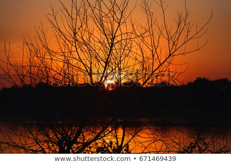 Fiery sunset at lakeside and silhouette forest Stock photo © Juhku