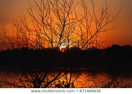 Ardente tramonto silhouette foresta nuvoloso spiaggia Foto d'archivio © Juhku