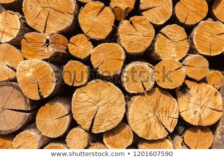 Oak woodpile  Stock photo © albertdw