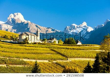 Bölge İsviçre doğa asma düşmek tarım Stok fotoğraf © phbcz