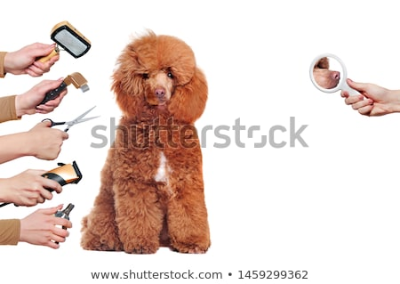 Comb for the animals. Stock photo © Serg64