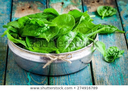 Green leafy plants Stock photo © bluering