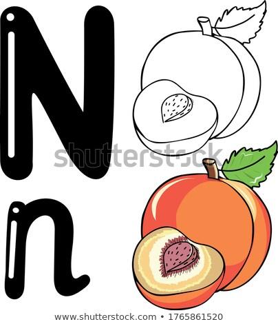 N betű nektarin illusztráció étel terv háttér Stock fotó © bluering