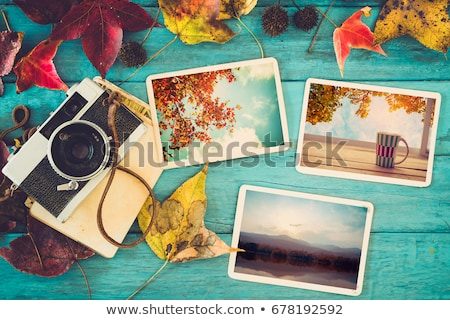 Collection of seasonal photos in vintage frames Сток-фото © Sandralise