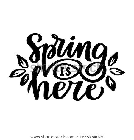 Wiosną tutaj kaligrafia odizolowany biały Zdjęcia stock © Anna_leni