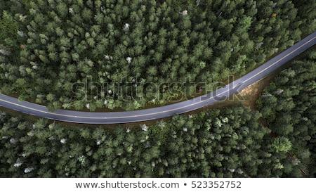 Bos weg outdoor landschap wild planten Stockfoto © ixstudio