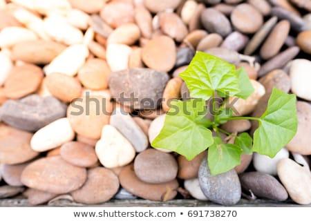 Never Give Up on White Brick Wall. Stock photo © tashatuvango
