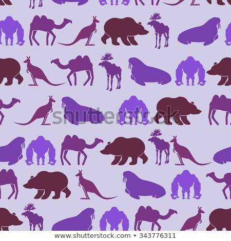 Zoo bezszwowy kolor tekstury zwierząt Zdjęcia stock © popaukropa