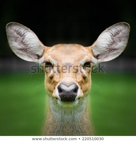Jager herten boom bos mannelijke Stockfoto © IS2