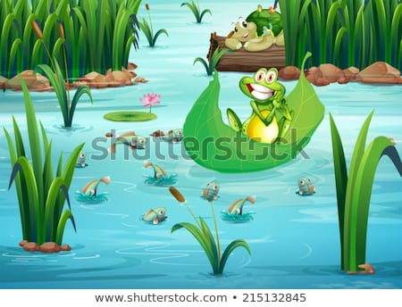 Kikker schildpad vijver illustratie water Stockfoto © colematt