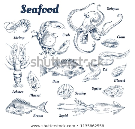 Bass Fish and Crab Posters Set Vector Illustration Stock photo © robuart