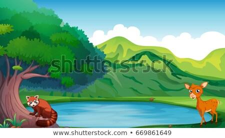Cena veado vermelho panda lagoa ilustração Foto stock © colematt