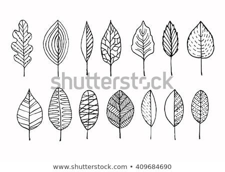 decorativo · folhas · isolado · preto · e · branco - foto stock © robuart