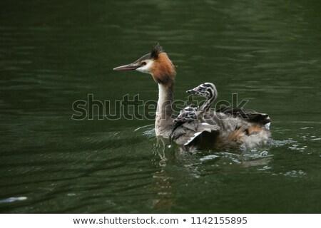 Chick indietro elegante famiglia Foto d'archivio © michaklootwijk