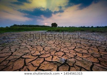 száraz · föld · repedt · agyag · föld · textúra - stock fotó © galitskaya