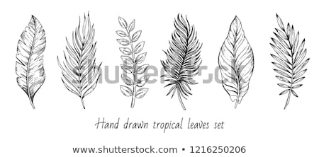Areca Palm Tropical Exotic Leaf Hand Drawn Vector Stock photo © pikepicture