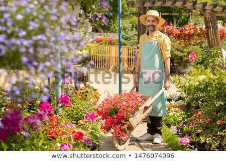 Mature bearded male gardener with cart standing between flowerbeds Stock photo © pressmaster