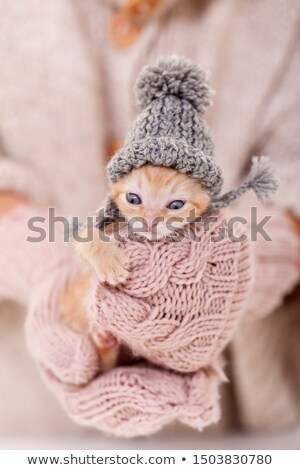 Hazır kış sevimli kedi yavrusu örgü yün Stok fotoğraf © ilona75