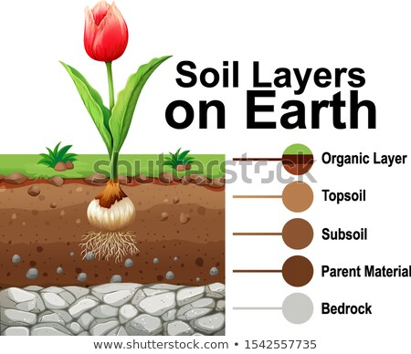 Soil layers on earth with tulip flower Stock photo © bluering
