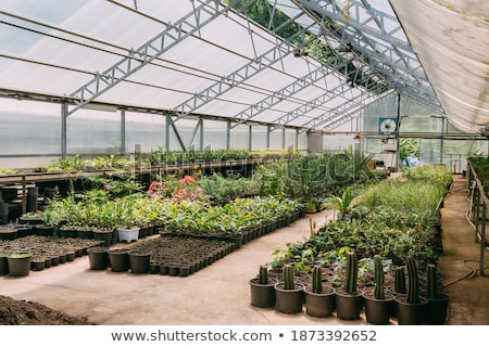 Many rows of green growing seedlings in small pots inside greenhouse Stock photo © pressmaster