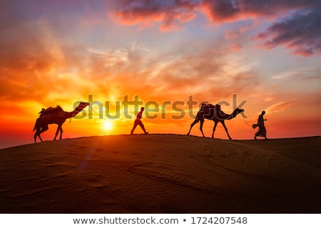 Indian cameleer camel driver with camel silhouettes in dunes on sunset. Jaisalmer, Rajasthan, India Stock photo © dmitry_rukhlenko