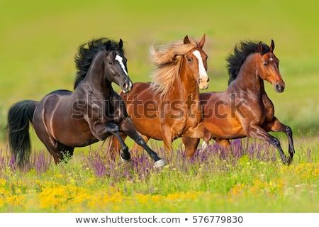 Brown horse galloping in green meadow Stock photo © deyangeorgiev