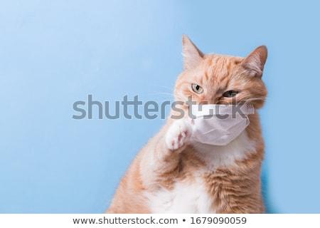 Kırmızı kedi enfekte göz bahçe enfeksiyon Stok fotoğraf © Hofmeester