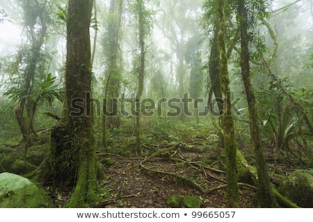 queensland landscape with tree fern and rain forest Stock photo © kikkerdirk