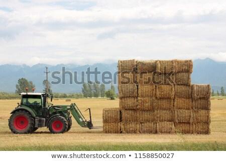 農家 · 乾草 · 男 · 青 · 白 · 笑みを浮かべて - ストックフォト © inxti