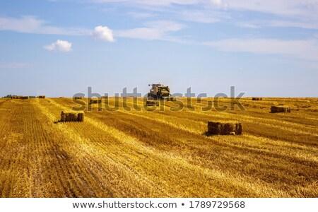 農業 · フィールド · わら · 俵 · 青 · 雲 - ストックフォト © goce