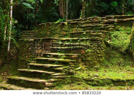 kayıp · şehir · merdiven · taş · orman · Kolombiya - stok fotoğraf © ildi