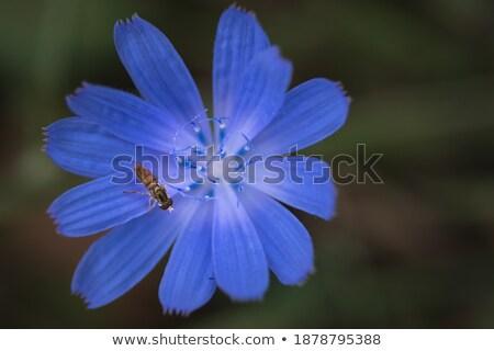 Azul flores voador flor verão animal Foto stock © samsem